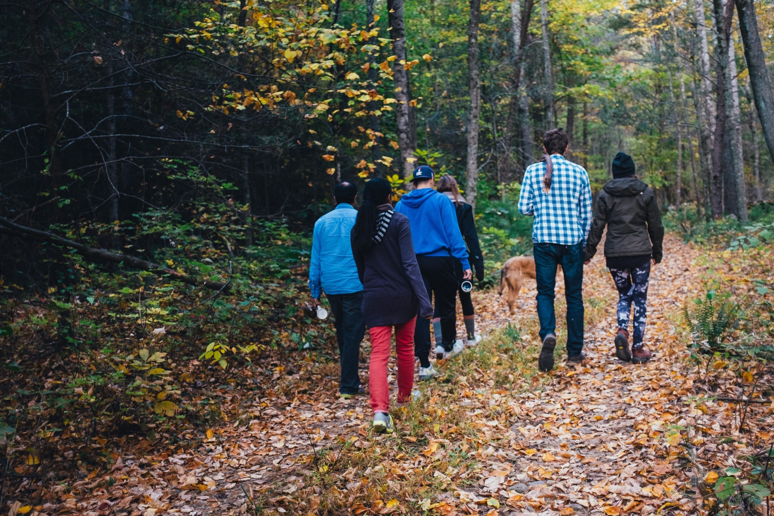 A group of people walking on a trail.