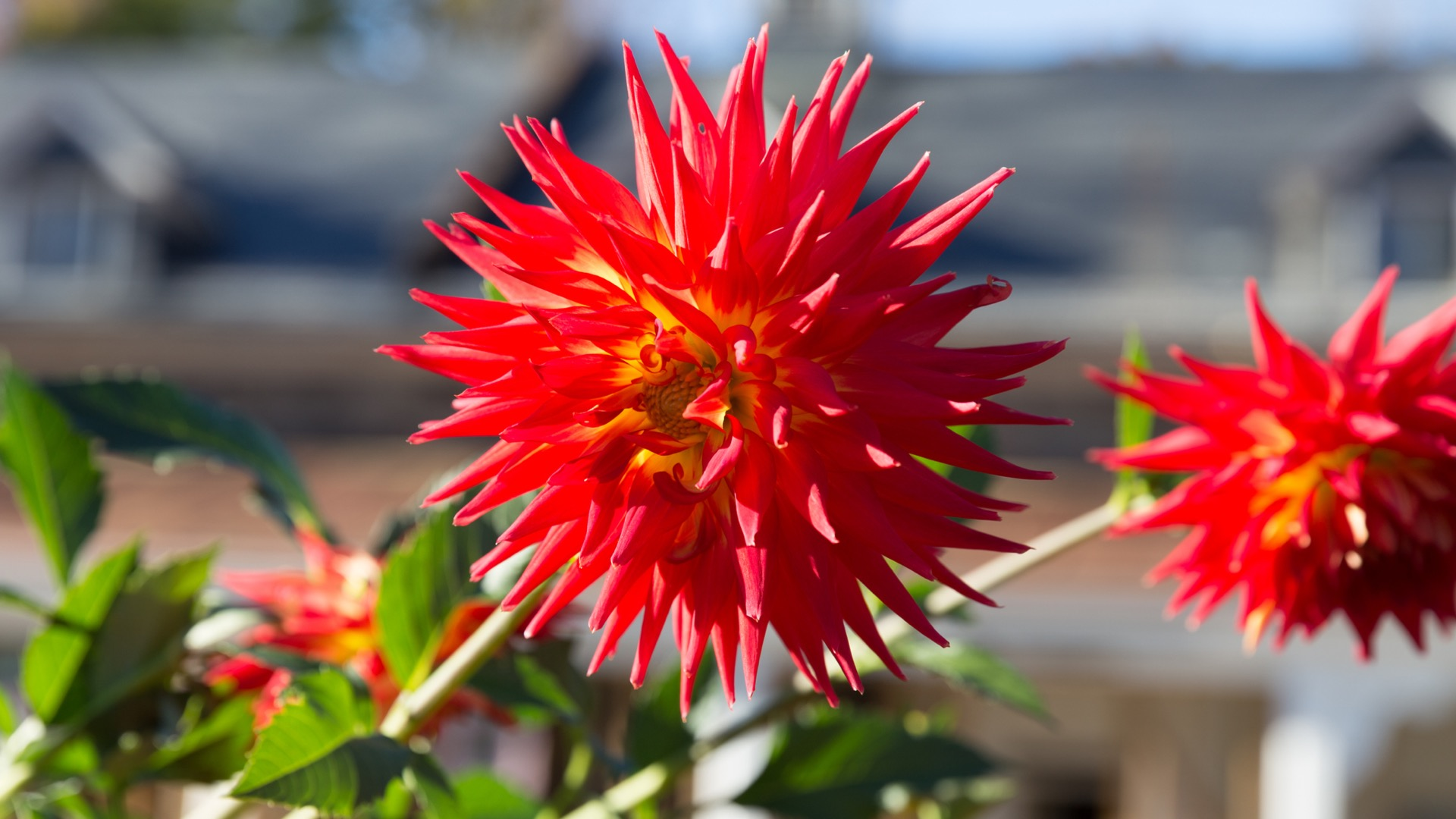 A red flower | Cylburn Arboretum in Baltimore