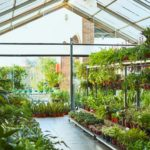 Various potted plants arranged in a greenhouse | nurseries near Baltimore